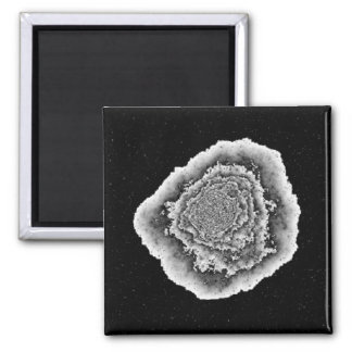 Cabbage in space square magnet