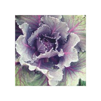 Cabbage Print