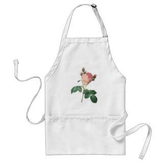 Cabbage Rose Botanical Print Standard Apron