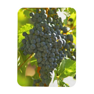 Cabernet Sauvignon grape bunch in the Chateau Rectangular Photo Magnet