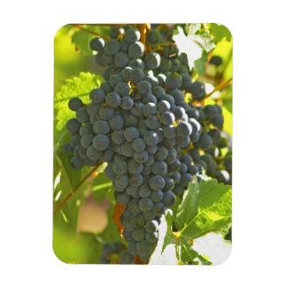 Cabernet Sauvignon grape bunch in the Chateau Rectangular Photo Magnet