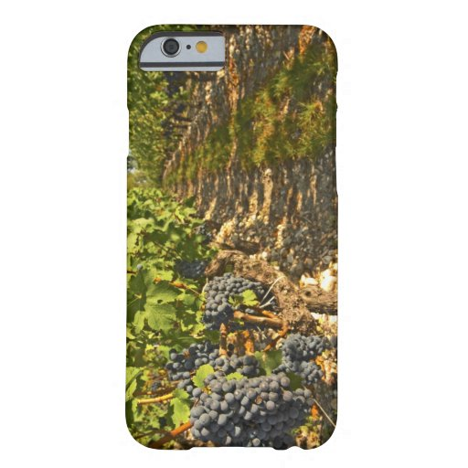 Cabernet Sauvignon vines in a row in the iPhone 6 Case