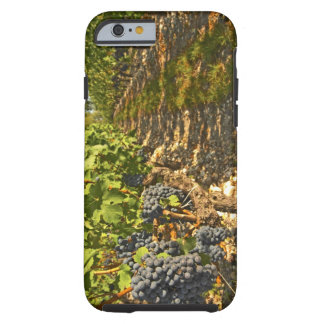 Cabernet Sauvignon vines in a row in the Tough iPhone 6 Case