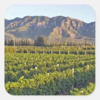Cabernet Sauvignon vines in Huailai Rongchen 2 Square Sticker