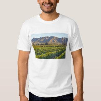 Cabernet Sauvignon vines in Huailai Rongchen 2 Tee Shirt