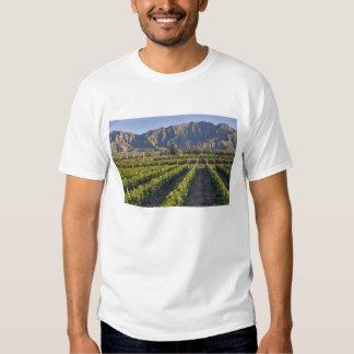 Cabernet Sauvignon vines in Huailai Rongchen Shirt