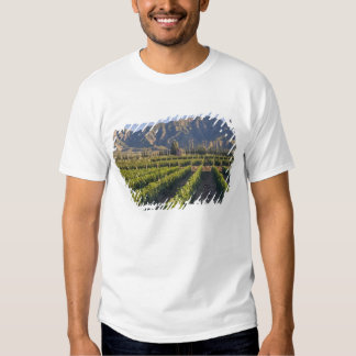 Cabernet Sauvignon vines in Huailai Rongchen T Shirts