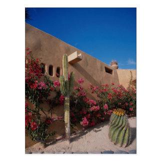 Cabo San Lucas, Baja, Mexico Post Card