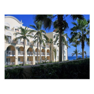 Cabo San Lucas Mexico Palm Trees Blue Sky Postcard
