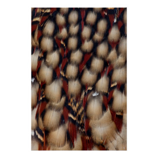 Cabot'S Tragopan Feather Pattern Poster