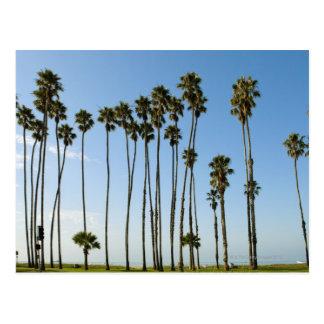 Cabrillo Avenue, Santa Barbara, California Postcard
