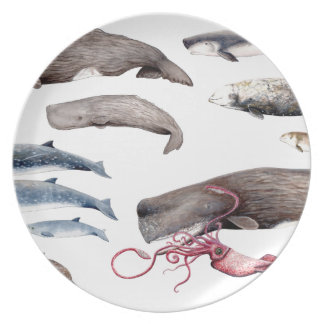 Cachalote and zifios: Whales of the depths Plate
