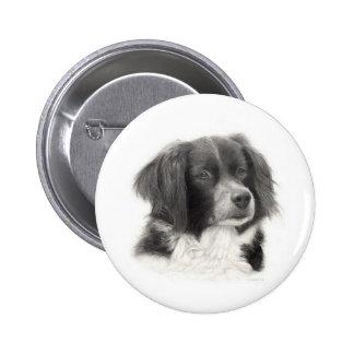 Cachorro - diversos pinback buttons