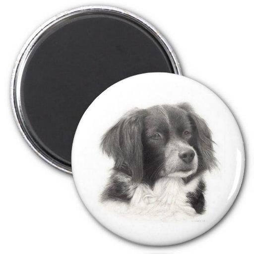 Cachorro - diversos magnets