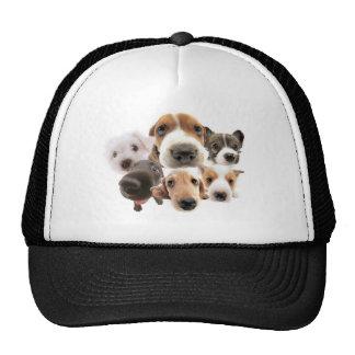 Cachorros Hat