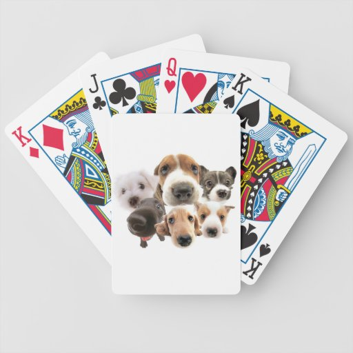 Cachorros Card Decks