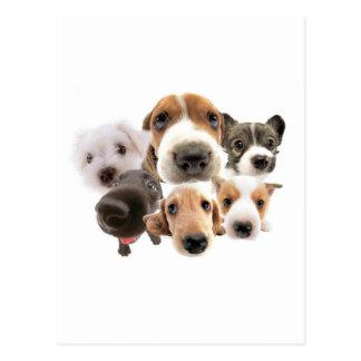 Cachorros Post Cards