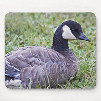 Cackling Canada goose Mouse Pads