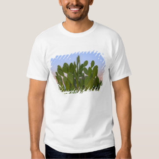 Cacti and sisal in Dry Forest Tees