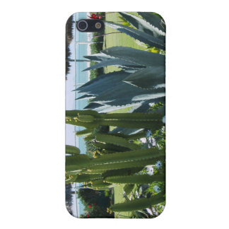 Cacti In Mexico iPhone 5 Cases