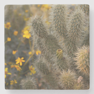 cactus and wildflowers stone coaster