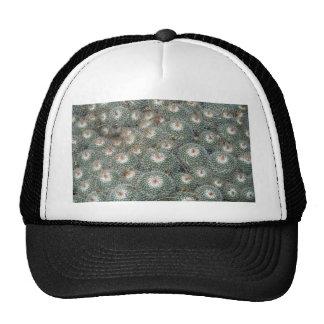 Cactus at Desert Botanical Gardens, Phoenix-Scotts Hats