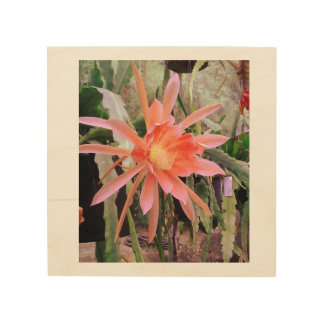 """Cactus Bloom"" Photograph on Wood Panel Wood Prints"