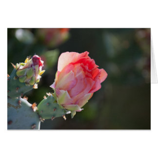 Cactus Blossom All Occasion Greeting Card
