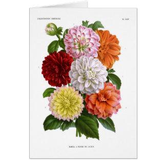 Cactus Dahlias Card