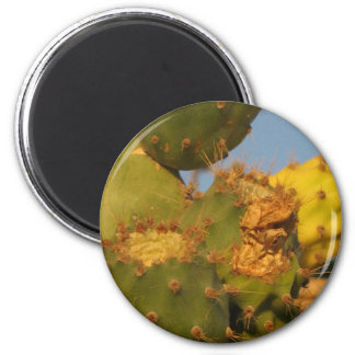 Cactus Detail Photography Round Magnet