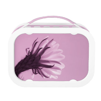 Cactus Flower in Pink Lunch Boxes