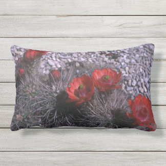Cactus Flower, Red Floral Cacti Desert Flowers Outdoor Cushion