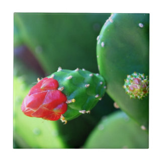 Cactus Flower Small Square Tile