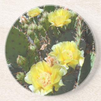 Cactus Flowers Sandstone Coaster