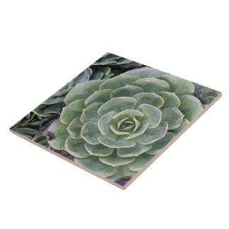 Cactus Garden Ceramic Tile