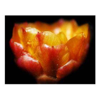 Cactus Glow Postcard