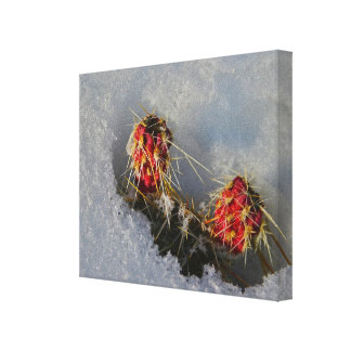 Cactus in the Snow Stretched Canvas Prints