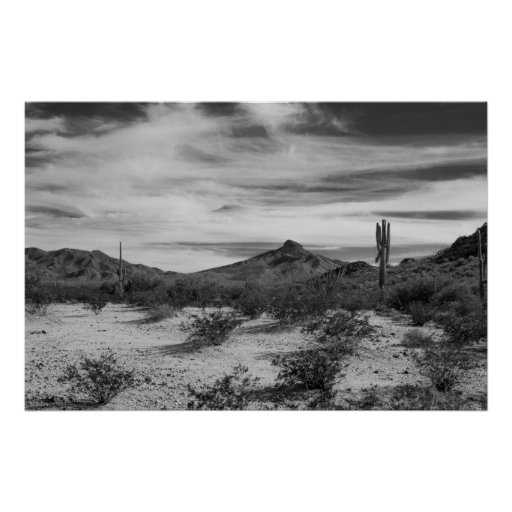 Cactus in white sands poster