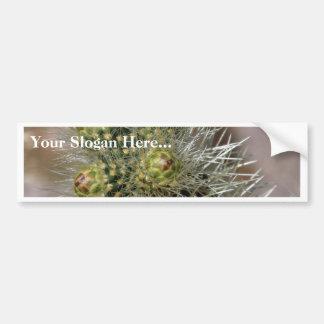 Cactus Needles In Anza Borrego Desert Bumper Sticker