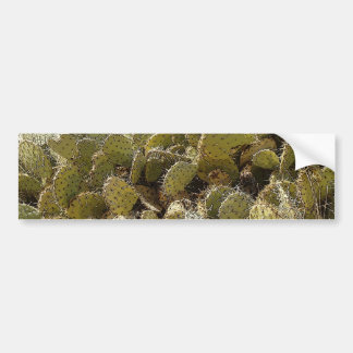Cactus Patch Bumper Sticker