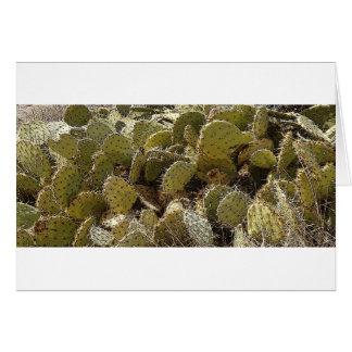 Cactus Patch Card