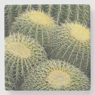 Cactus Pattern Stone Coaster