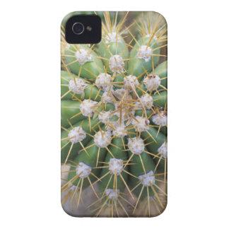 Cactus Top Case-Mate iPhone 4 Cases