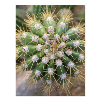 Cactus Top Postcard