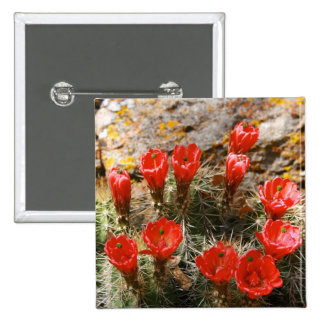 Cactus with Beautiful Red Blooms Pins