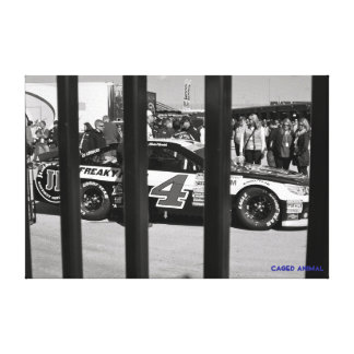 Caged Animal Stretched Canvas Prints