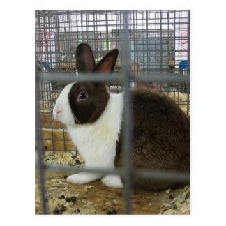 Caged Bunny Postcard