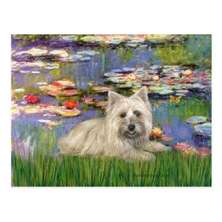 Cairn Terrier 4 - Lilies 2 Postcard