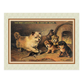 Cairn Terrier Dog and Her Puppies Postcard