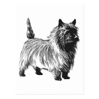 Cairn Terrier Dog Postcard